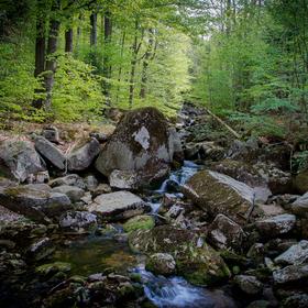Hájný potok