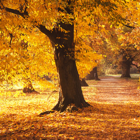 Jednou na podzim