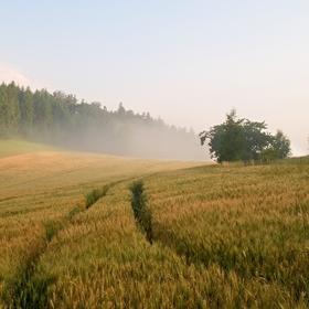 Ráno v polích