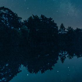 Noční Vrbovka