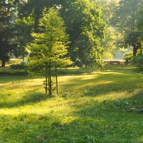 Zlatý strom a lavička