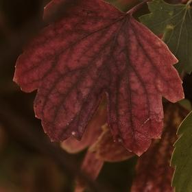 Barva listů (za plotem)