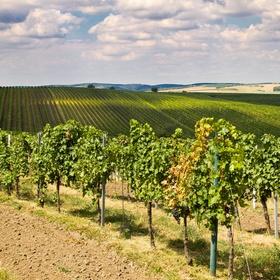 Moravské vinice