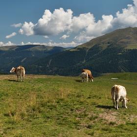 Panoramahütte - Turracher Höhe