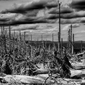 Mrtvá krajina Šumavy
