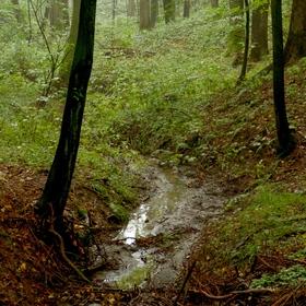 ... jen tak , v lese