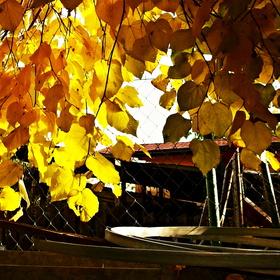 podzimní zlato