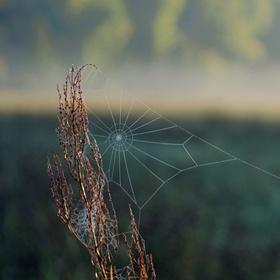 příroda čaruje