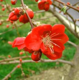 Jarní květy..