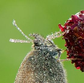 Motýlí ráno