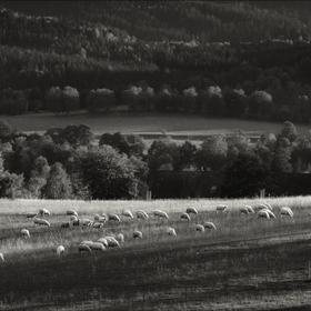Ovečky pod horama