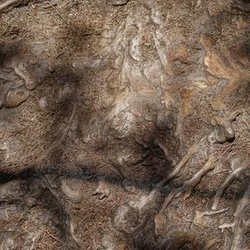 lesní obrazy