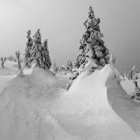 v sněhovém zajetí