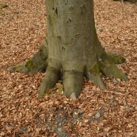 ...dřevěná noha :-)