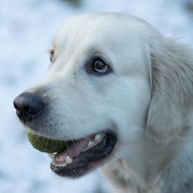 A vážně ten míček chceš ?