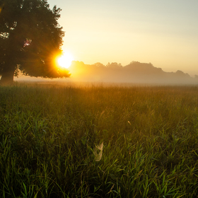 Pohansko-svítání