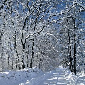 Sněhová nadílka
