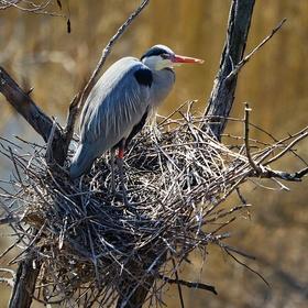 Ptačí architekt