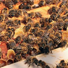 Pohled do úlu