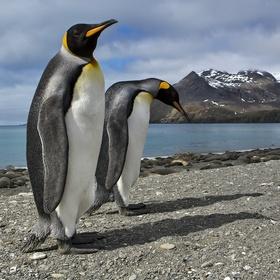 tučňáci ...