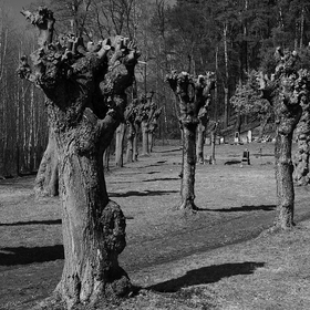 Hřbitovní strážci