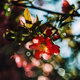 Jarní paleta barev