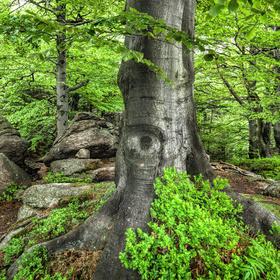 """Jarní Jizerky - """"Oko lesa"""""""