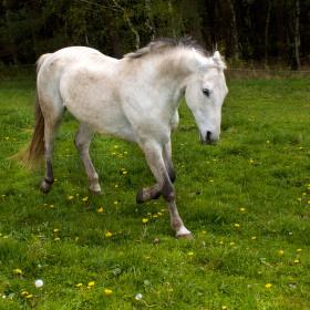 Krása koně v pohybu