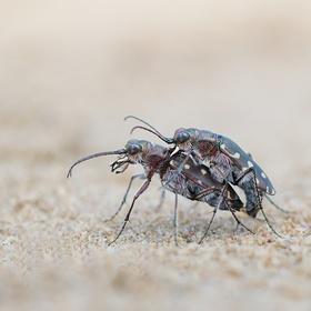 Lásky mezi zrnkami písku..