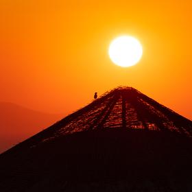 Ptáček sleduje západ slunce