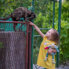 Setkání s chorvatskou kočkou