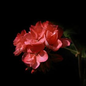 V květu