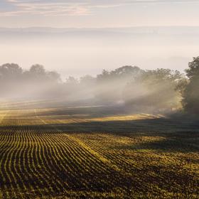 Ráno na Hanáckém pol