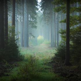 Podzimní ráno v lese