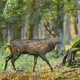 obrázky z podzimního lesa (10)