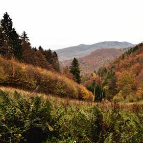 poslední podzimní barvy