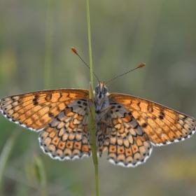 Motýlí pohled
