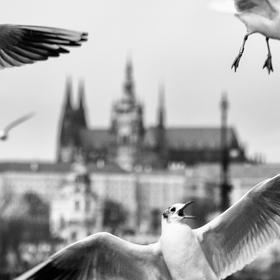 Hitchcock v Praze