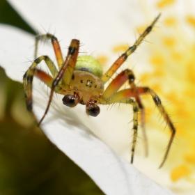 Makro pavoučka :)
