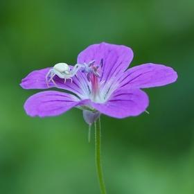 Život na květu