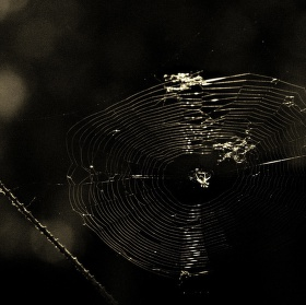 Pavučina snů