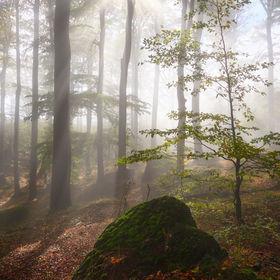 Živoucí les