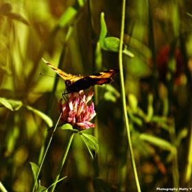 okem na motýla