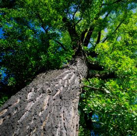 Vzhůru do korun stromů