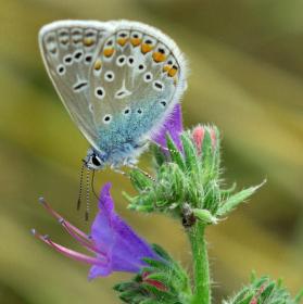 Motyl na kvetu.