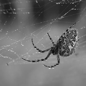 Pavoučisko.....