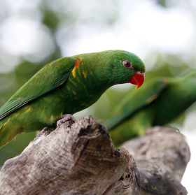 Ptačí sourozenci
