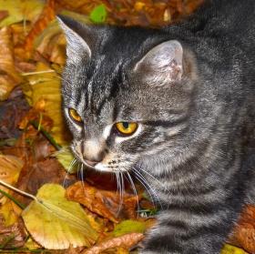 Podzimní lov