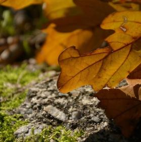 Podzim už začíná