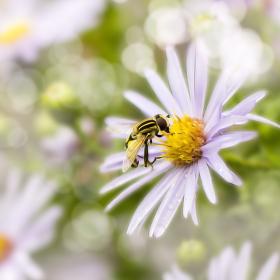 Květina :-)